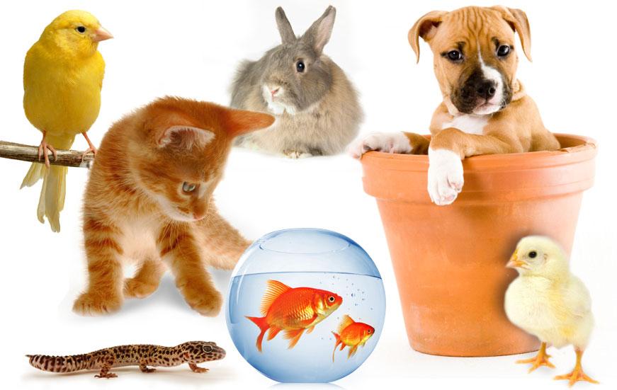 Negocios Rentables - Negocio de mascotas
